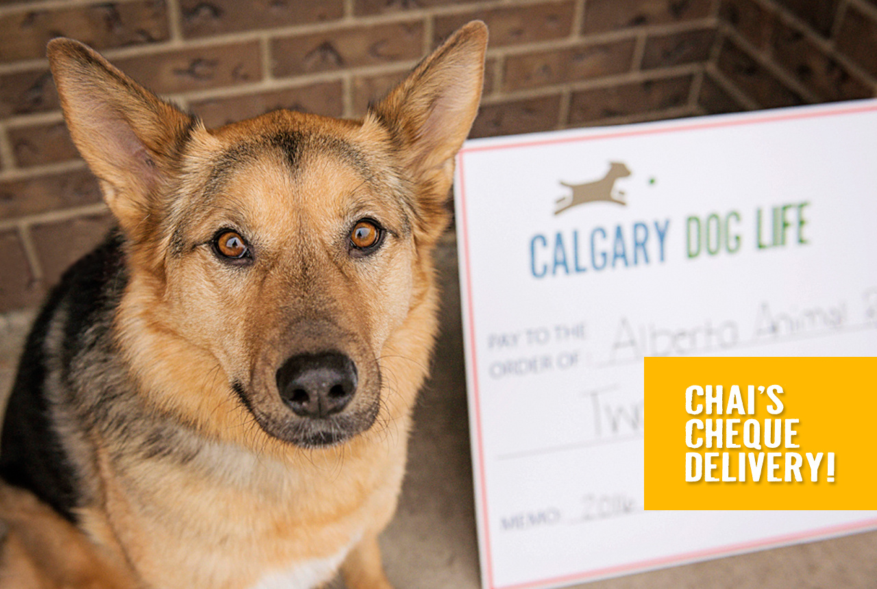 alberta-rescue-crew-donation-calgary-dog-life