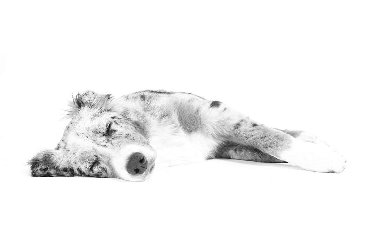 dog-sleeping-photo