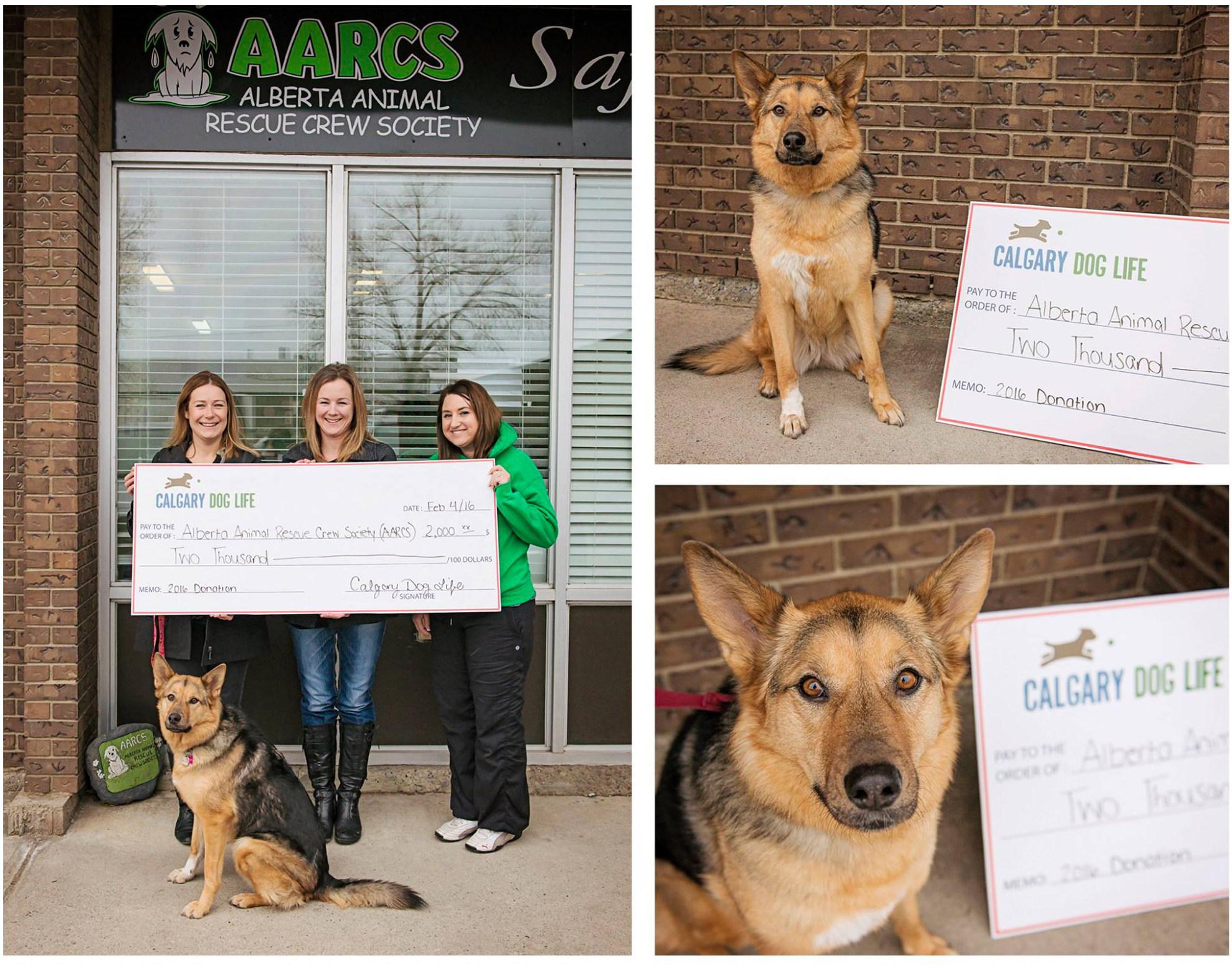 Calgary Dog Rescue Organizations