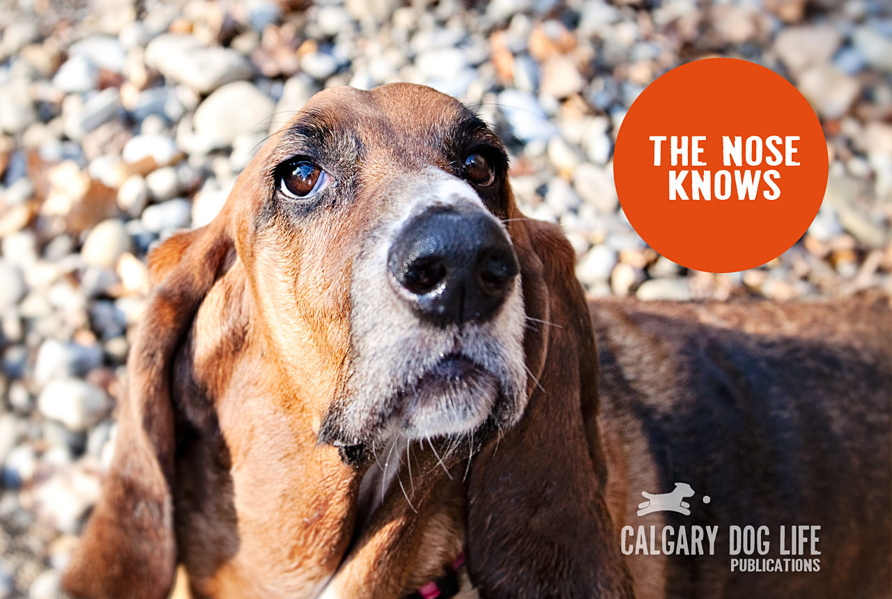 YYC_dogs_calgary_dog_life_site_publications