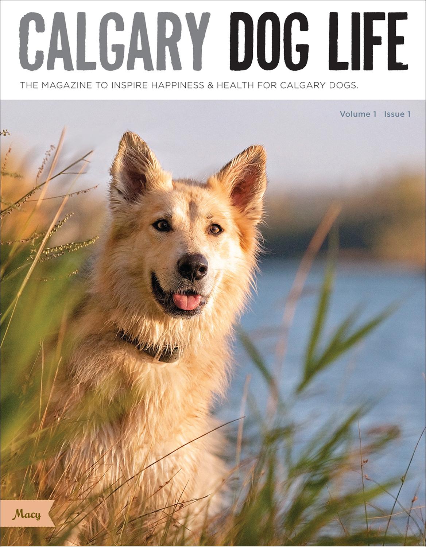 calgary_dogs_magazine_advertising_publications