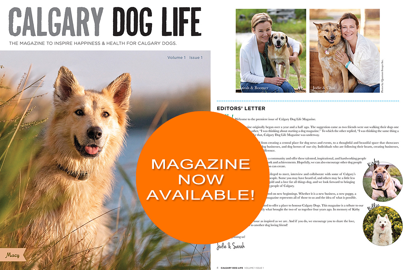 The Release Of CalgaryS Premiere Dog Magazine