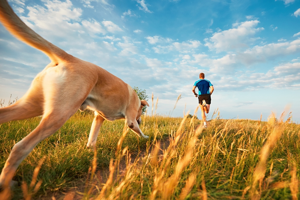blog on running with your dog