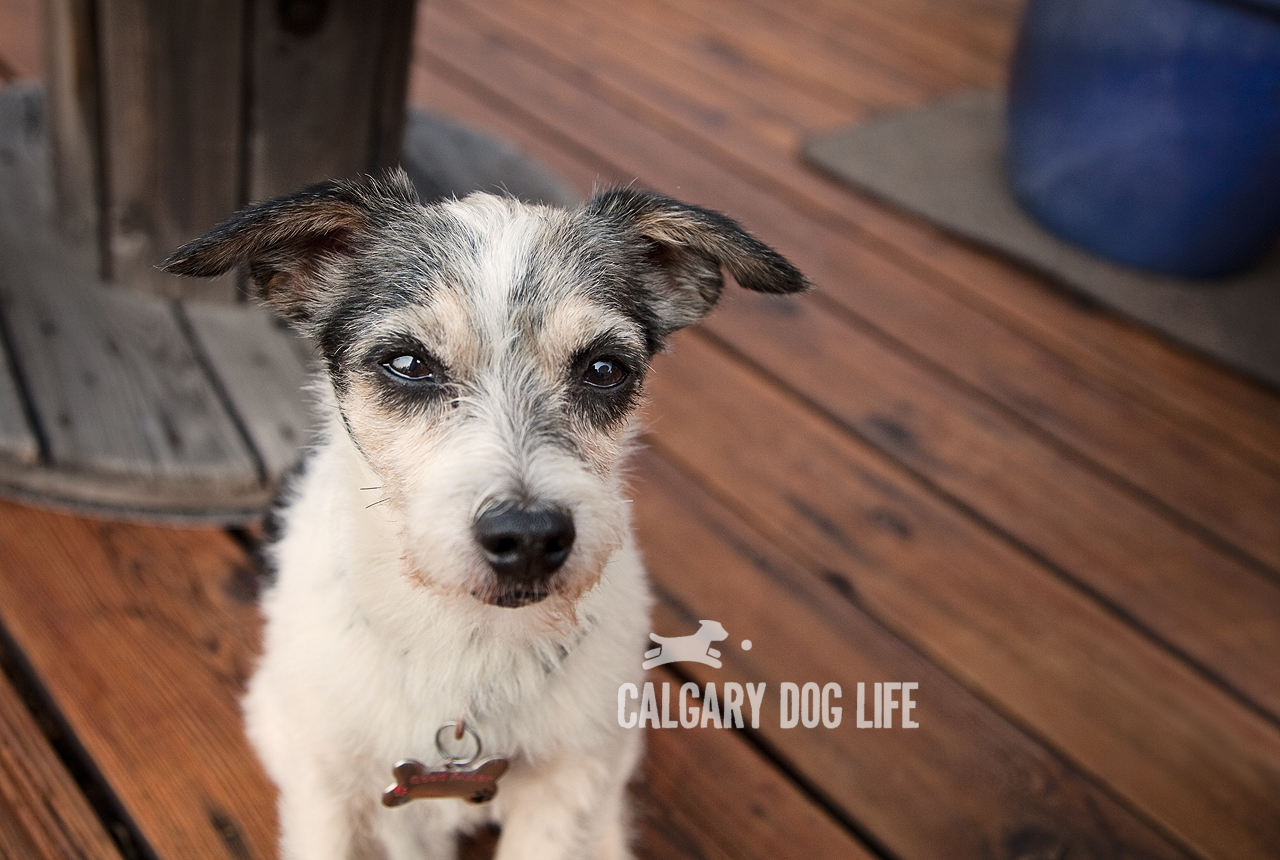 Calgary Dog Life Emotions Blog