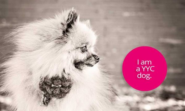 Professional Pet Styling for Dog Lovers!