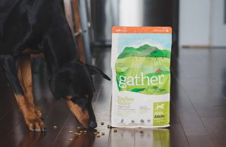 Helping your Dog Deal with Food Sensitivities