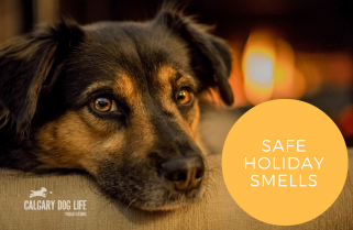 Safe Holiday Diffusing For Your Dog