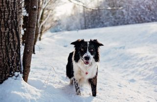 How to keep your dog healthy this Holiday Season