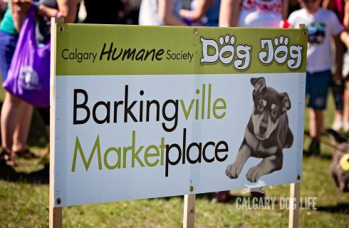 Calgary Dogs Break A World Record!