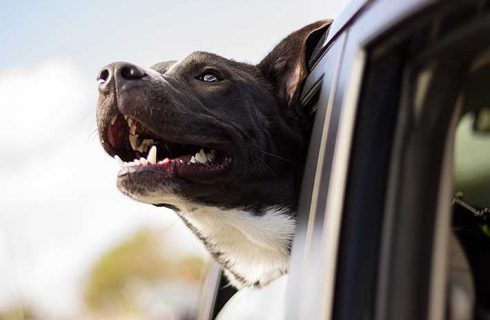 Pet Traveling Made Easy