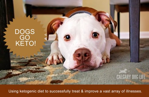 Ketogenic Diets for Dogs